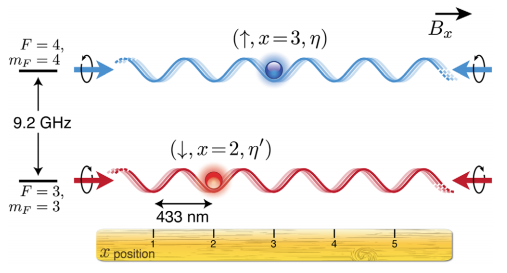 Dibujo20150122 transport single Cs atoms in state-dependent periodica potentials - phys rev x