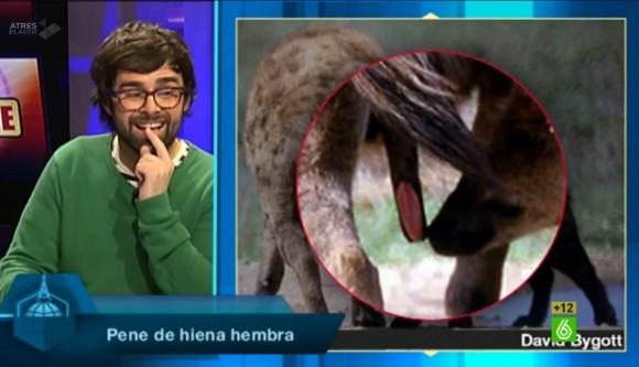 Dibujo20150127 Ricardo Moure - pene hiena hembra - en el aire - buenafuente - la sexta