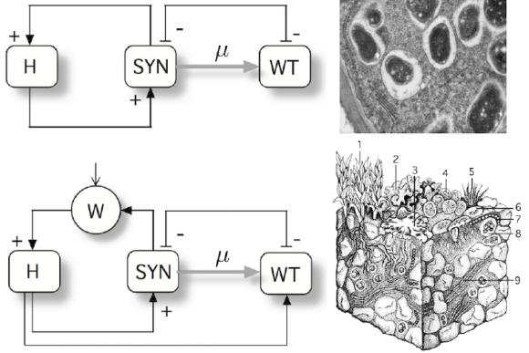 Dibujo20150324 Terraformation motifs involving closed cooperation among players - arxiv - icrea