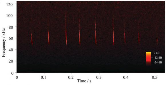Dibujo20150713 Applications graphene microphone - bat calls -Parastrellus hesperus- pnas org