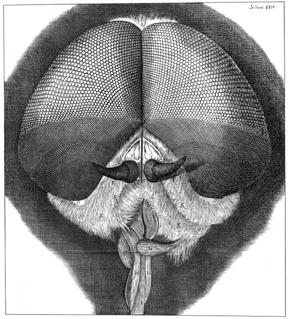 Dibujo20150805 micrographia - robert hooke - curiosidad - philip ball