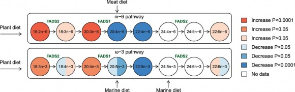 Dibujo20150919 association between the fatty acids in the omega-3 and omega-6 synthesis pathways - science mag