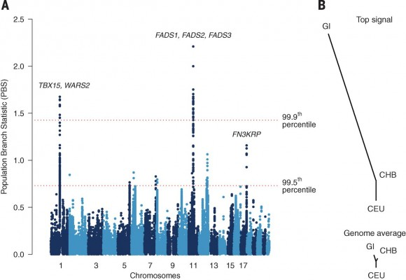 Dibujo20150919 mutations - chromosomes - inuit snp - science mag