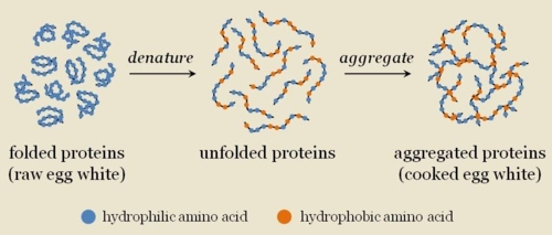 Dibujo20150922 egg folded proteins denature to unfolded proteins and aggregate to aggregated proteins - tumblr com