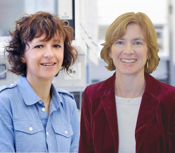 Dibujo20150930 Emmanuelle Charpentier and Jennifer Doudna - chemistry nobel prize 2015 most promising candidates