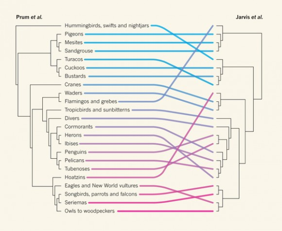 Dibujo20151012 A comparison of avian phylogenies - nature com