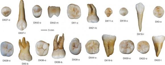 Dibujo20151017 Daoxian human teeth selection - nature15696-f2