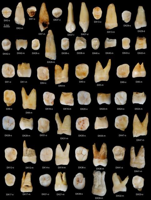 Dibujo20151017 Daoxian upper teeth - nature15696-sf2