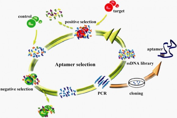 Dibujo20151021 aptamer network translational research
