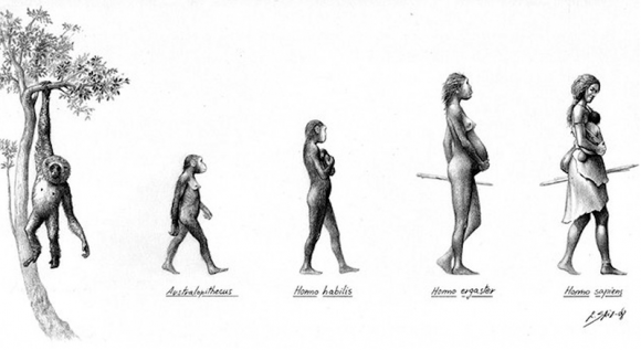 Dibujo20151021 human evolution women