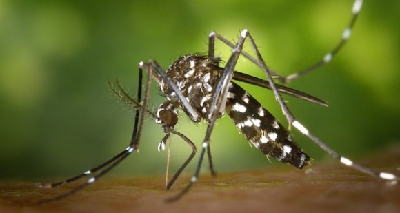 Francis en NEUDC (RNE): ¿Por qué me pican los mosquitos y a ti no?