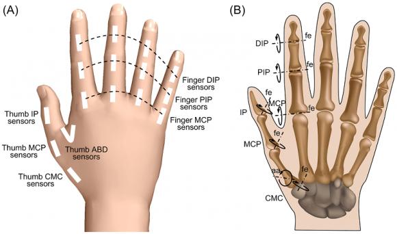 Dibujo20160313 human hand anatomy journal.pone.0146193.g001 plos one