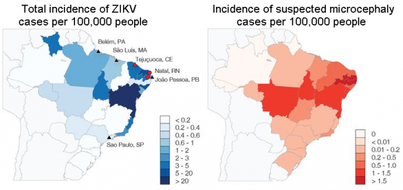 Dibujo20160324 incidence zikv and microcephay cases per 100 000 people science aaf5036