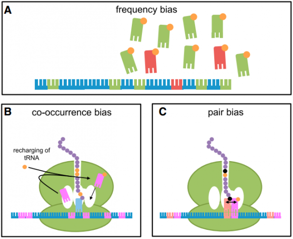 Dibujo20150526 different types of codon bias cell press sciencedirect com
