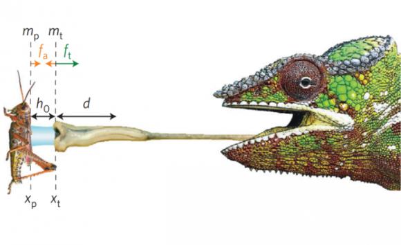 Dibujo20160626-camaleones-capturan-grandes-presas-gracias-a-su-viscosa-saliva