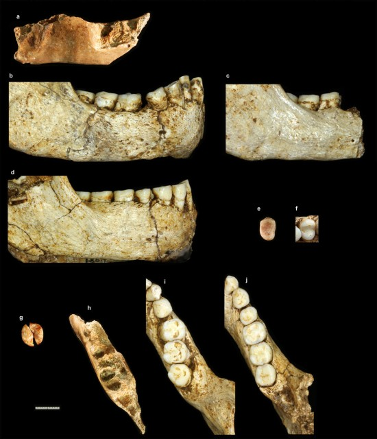Dibujo20160704 Comparisons of the hominin mandibles and teeth from Soa Basin Mata Menge and H floresiensis from Liang Bua nature17999-sf4