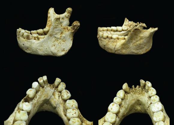 Dibujo20160704 Photographs LB1 and LB6 mandibles homo floresiensis plos one journal pone 0155731 g001