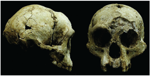 Dibujo20160704 Photographs of LB1 cranium homo floresiensis plos one journal pone 0155731 g001