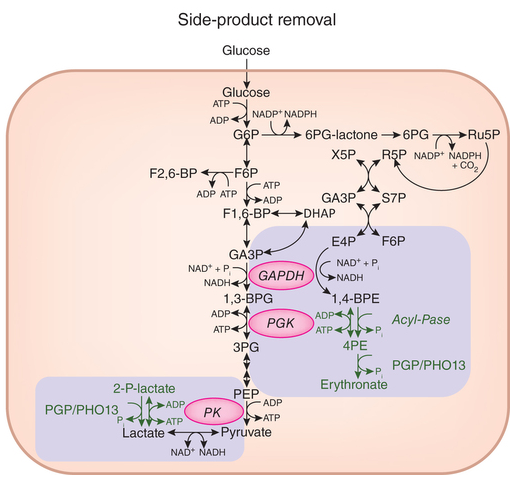 Dibujo20160720 Glycolysis side-product repair by PGP PHO13 nchembio.2133-F1