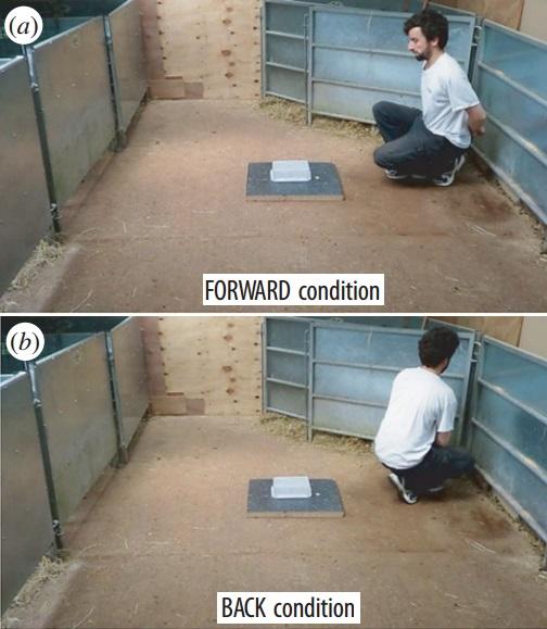 Dibujo20160725 forward back conditios goat experiments