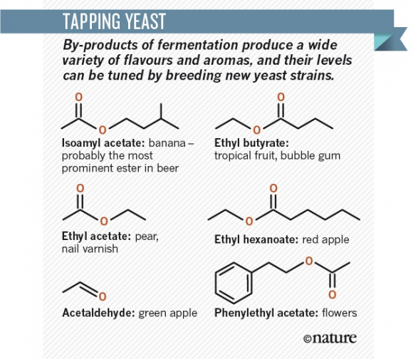 Dibujo20160728 tapping yeast by-products fermentation nature com