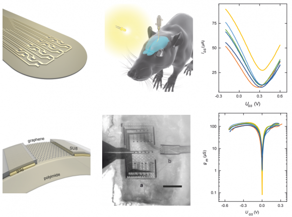 dibujo20161121-graphene-implant-rat-brain-and-transistor-response
