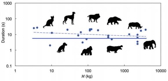 Dibujo20170802 defecation duration vs size mammals soft matter doi 10 1039 C6SM02795D