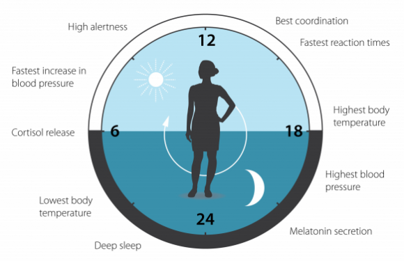 Dibujo20171002 circadian clock impact human physiology nobelprize 2017