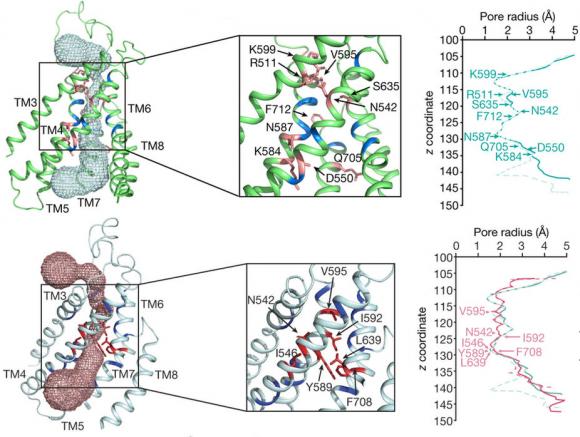 Dibujo20171221 TMEM16A pore lipid nanodiscs and LMNG solution nature25024