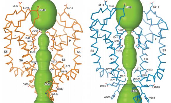 Dibujo20171226 Open and closed ion channel pore trpv6 nature25182-f3ab