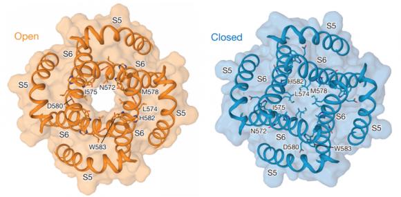Dibujo20171226 Open and closed ion channel pore trpv6 nature25182-f3de