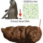 El editor de Scientific Reports elimina la imagen de Trump en las heces de un babuino