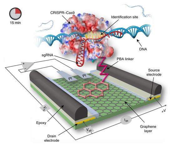 Crispr Chip Un Detector Móvil De Adn Que Usa Transistores