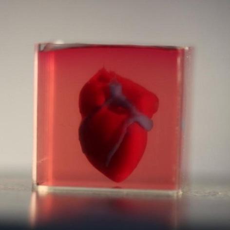 Imprimen en 3D un pequeño corazón de tejido cardíaco con sistema vascular