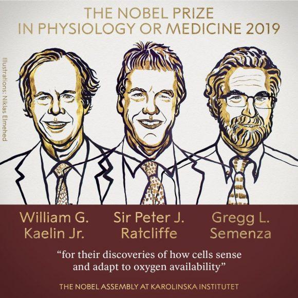 Premio Nobel de Medicina 2019: Kaelin Jr., Ratcliffe y Semenza por la regulación de la hipoxia y la sensibilidad al oxígeno
