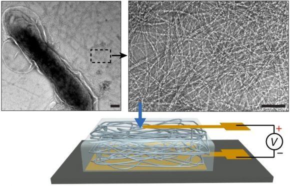 Generan electricidad a partir de la humedad del aire usando nanohilos de proteínas