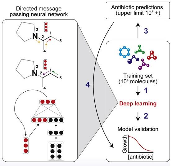 HALicina: un potente antibiótico descubierto gracias a una inteligencia artificial