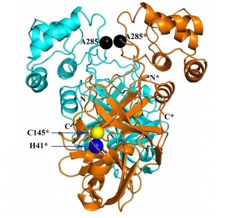 La estructura 3D de la proteasa principal (Mpro) del coronavirus SARS-CoV-2