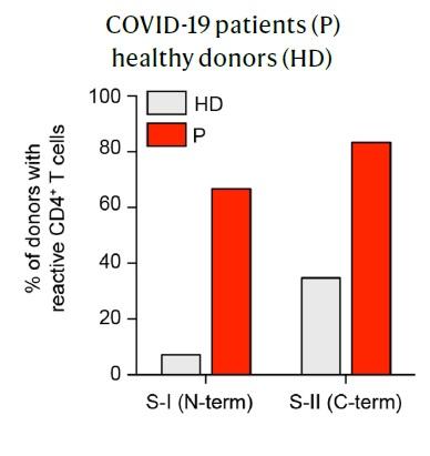 Nature publica más resultados sobre la inmunidad cruzada entre coronavirus