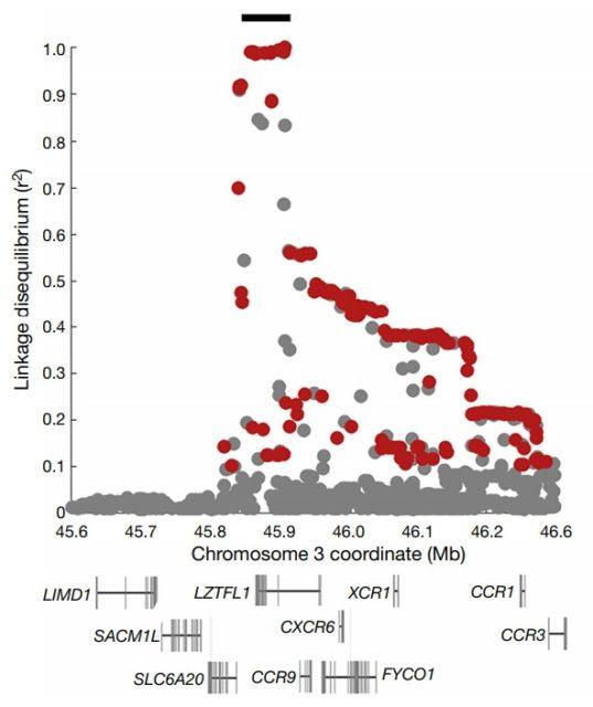 La relación entre la severidad de la COVID-19 y nuestro genoma neandertal
