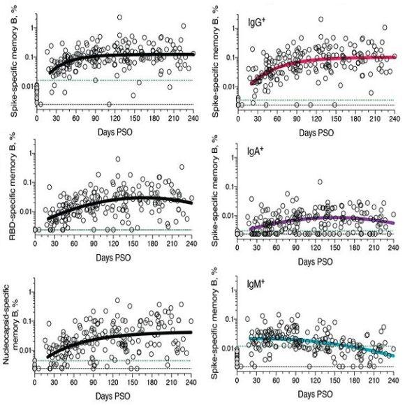 La evolución de la inmunidad al SARS-CoV-2 tras superar la COVID-19